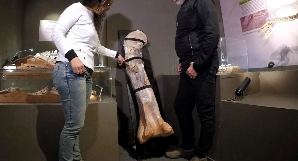 أكبر حفريات الديناصورات اكتشفت في الأرجنتين