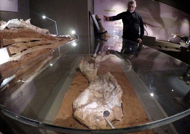 اكتشاف أحفوري يغير النظرة حول الديناصورات العملاقة