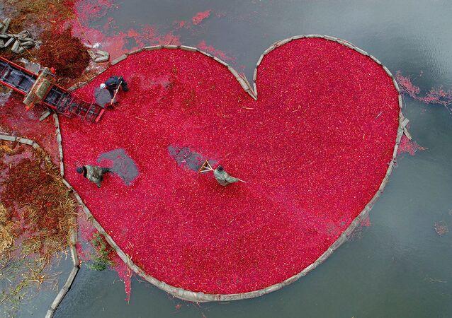 صورة بعنوان قلب من التوت البري، للمصور البيلاروسي سيرغي غابون، الحاصلة على المركز الأول في فئة التصوير كوكبي