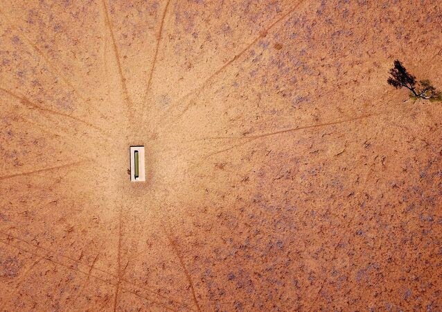 شجرة وحيدة تقف بالقرب من حوض مائي في مزرعة جيمي آند ماكاون التي جفت، وتقع على مشارف بلدة والجيت في منطقة نيو ساوث ويلز، أستراليا، 20 يوليو/ تموز 2018