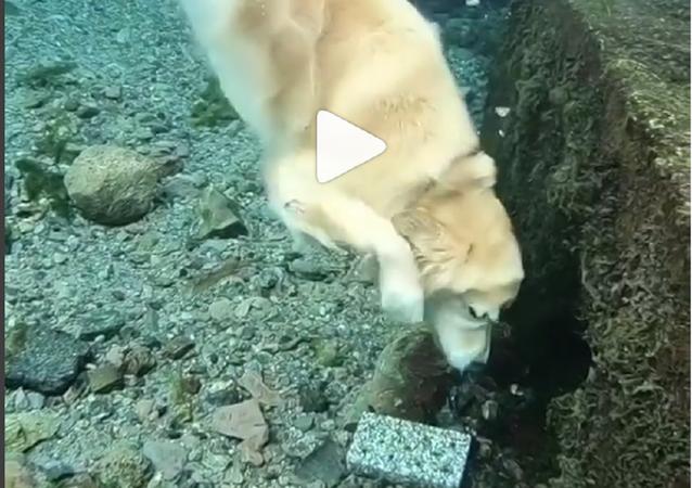 كلب يغطس