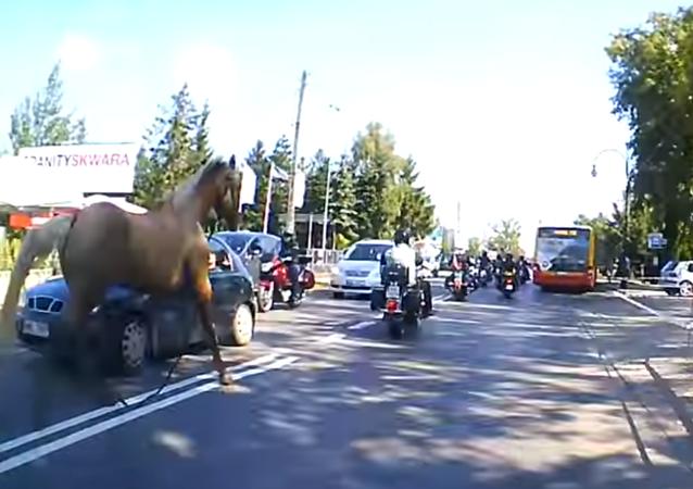 حصان هائج يهاجم سائق دراجة نارية