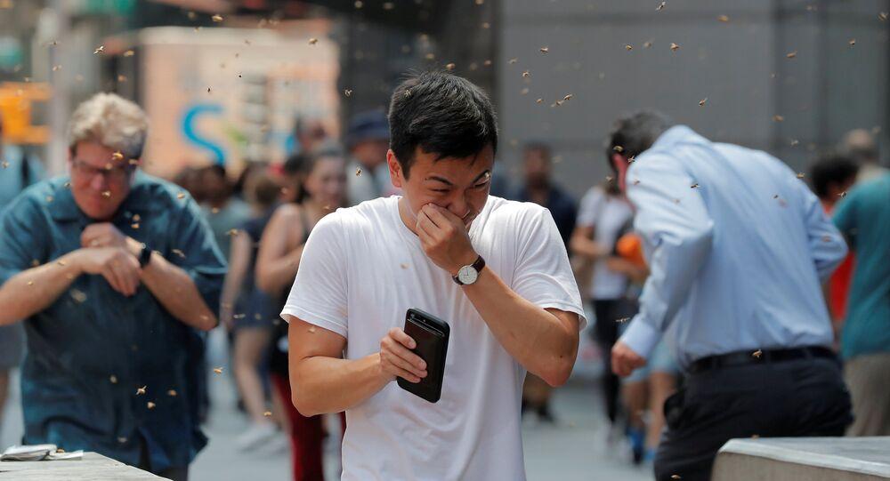 سرب من النحل يهاجدم دينة نيويورك، الولايات المتحدة 28 أغسطس/ آب 2018