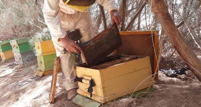 عسل النحل الليبي