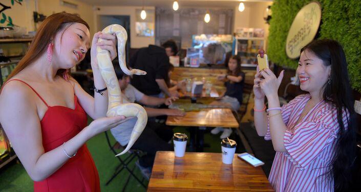 زبائن مقهى في كمبوديا يلعبون مع الأفاعي