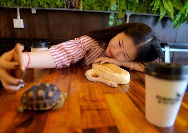 زبونة مقهى تلتقط صورة مع أفعى