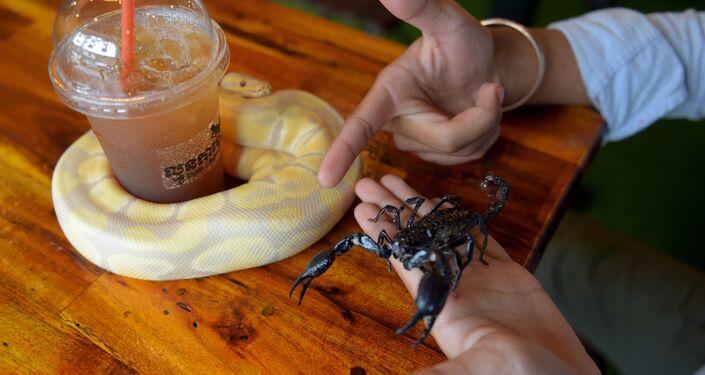 زبون مقهى في كمبوديا يداعب عقربا