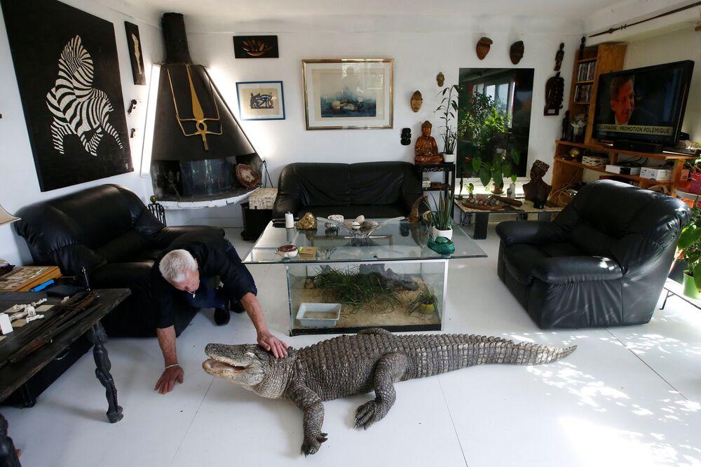 الفرنسي فيليب جوي، 67 عاما، يعيش مع أكثر من 400 زوج من الزواحف، في غرفة معيشته في نونت، فرنسا 19 سبتمبر/ أيلول 2018