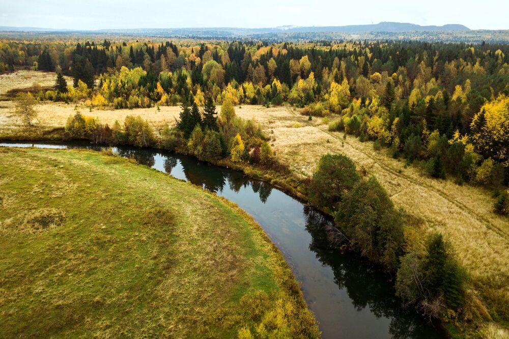 غابة في فصل الخريف في إقليم بريمورسكي كراي