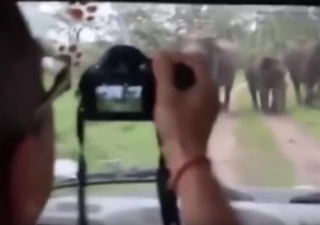 قطيع فيلة يهاجم السياح