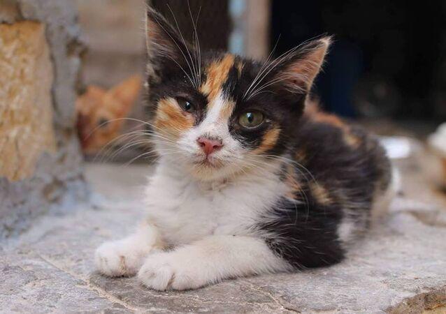 شاب ليبي يقوم برعاية قطط الشوارع