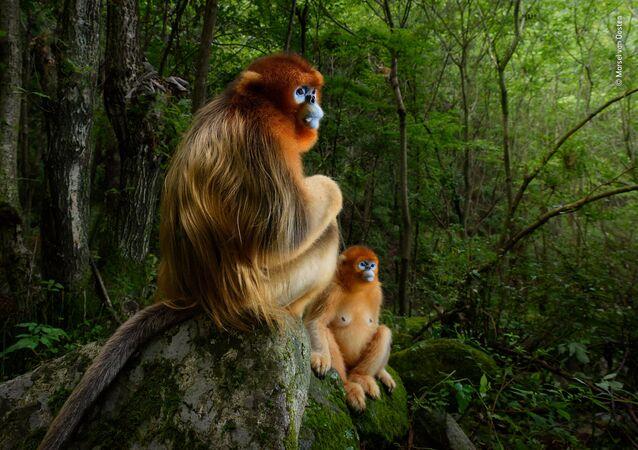 صورة (The golden couple)، للمصور مارسل فان أوستن من هولندا، الفائز بجائزة المسابقة