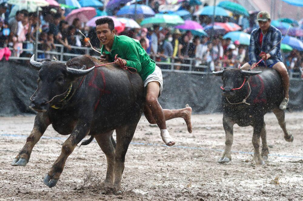 أحد المشاركين في مهرجان سباق الجاموس في محافظة تشونبوري، تايلاند 23 أكتوبر/ تشرين الأول 2018