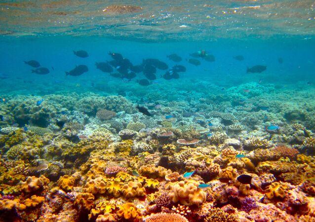 الحيد المرجاني العظيم في أستراليا