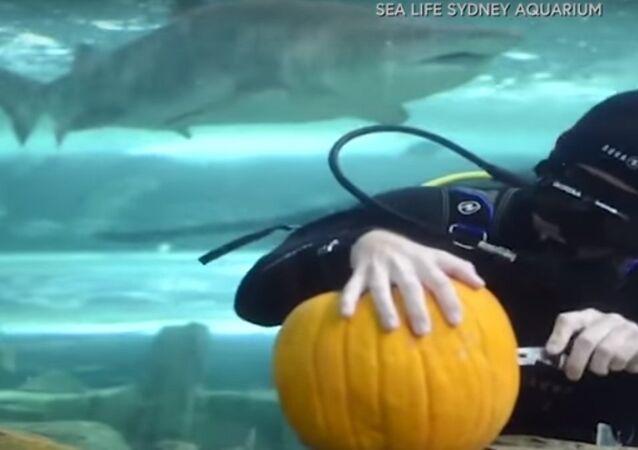 غواصان ينحتان قروع عسلية تحت الماء