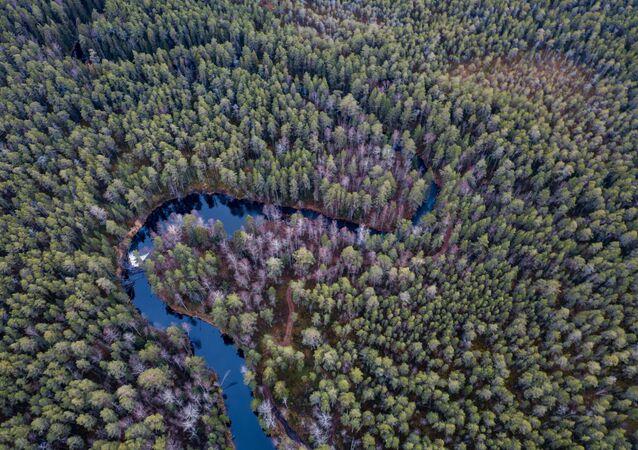 غابات روسية