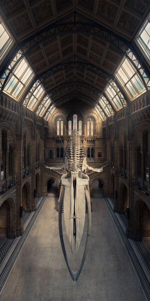 صورة بعنوان الحوت الأزرق، للمصور بيتر لي، الحاصلة على المرتبة الثانية في فئة هواة بيئة البناء