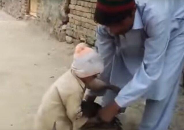 بالفيديو...طفل ينقذ حياة دجاجة من الذبح