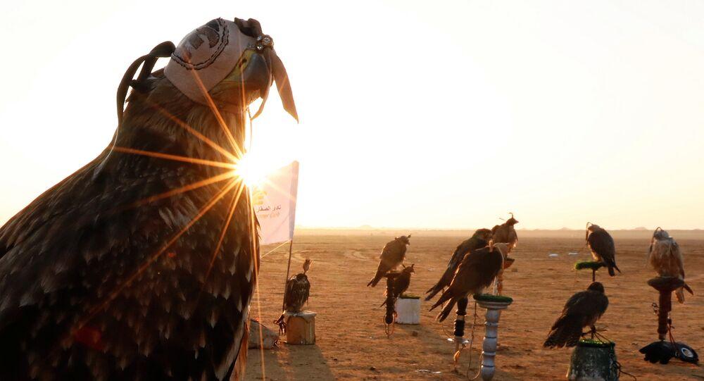 صقور خلال شروق الشمس والاحتفال باليوم العالمي للصقارة في صحراء برج العرب بالإسكندرية
