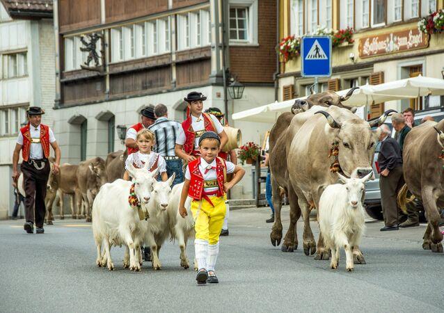 الأبقار في سويسرا