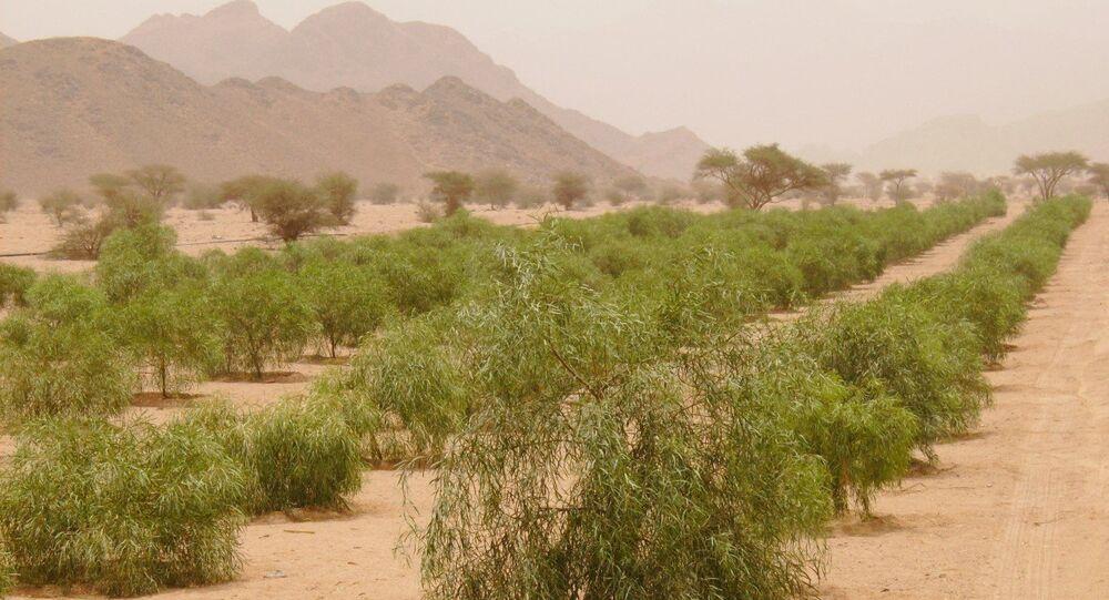 تنمية الغطاء النباتي بزراعة الأشجار