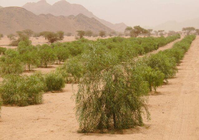 السعودية تنمي الغطاء النباتي بزراعة 12 مليون شجرة