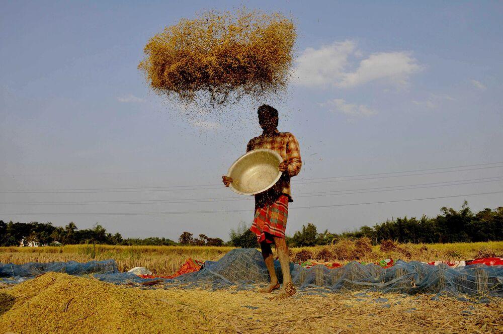 مزارع ينقل الأرز على مشارف مدينة أغارتالا الهندية، 2 ديسمبر/ كانون الأول 2018