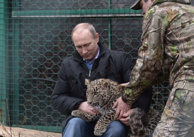 فلاديمير بوتين يداعب فهدا