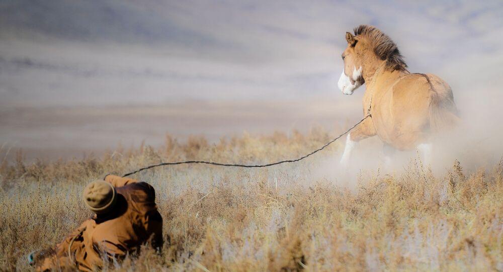 راعي منغولي وخيله