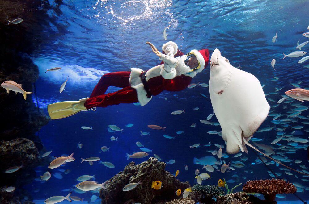 غطاس في زي يانتا كلاوز (بابا نويل) في حوض للأسماك Sunshine Aquarium، في إطار عرض مائي في طوكيو، اليابان 18 ديسمبر/ كانون الأول 2018