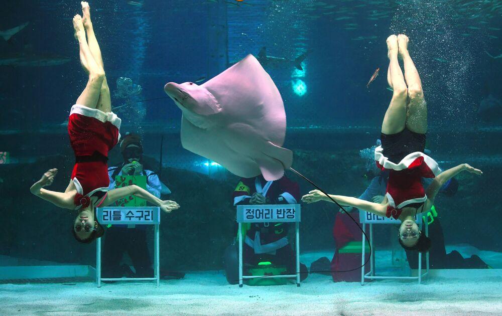 الغواصون في أزياء سانتا كلاوس في سيول، كوريا الجنوبية