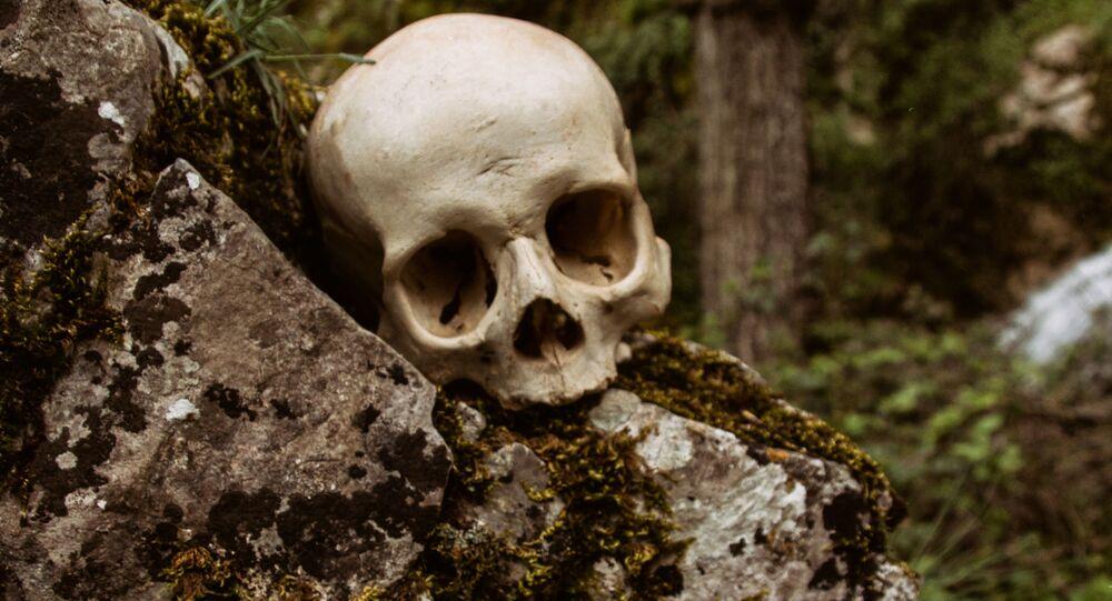 جمجمة في الغابة