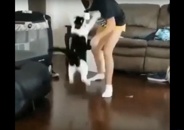 قطة تهجم على صاحبتها
