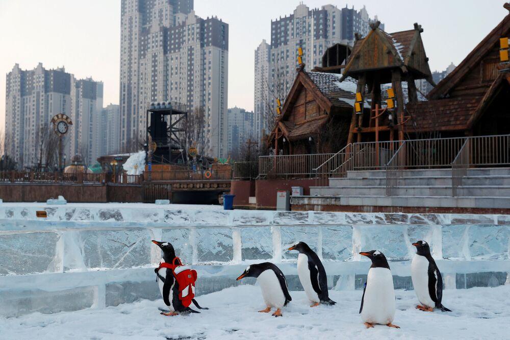بطارقة خلال فعالية ترويجية خلال مهرجان الجليد السنوي في مدينة هاربن، مقاطعة هيلونغجيانغ، الصين 6 يناير/ كانون الثاني 2019