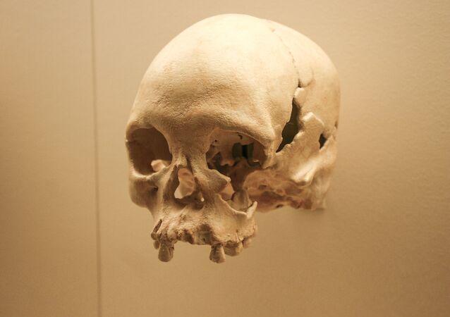 جمجمة في متحف في واشنطن