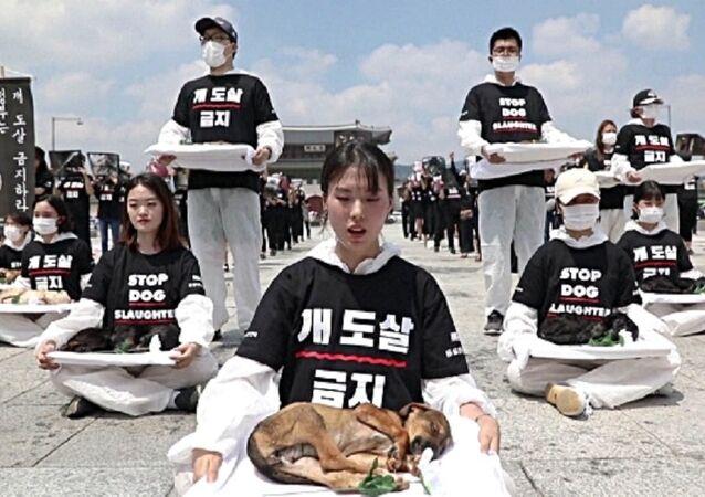 ناشطون في مجال حقوق الحيوان خلال فعالية في ساحة جوانج هوا مون ، وسط سيول