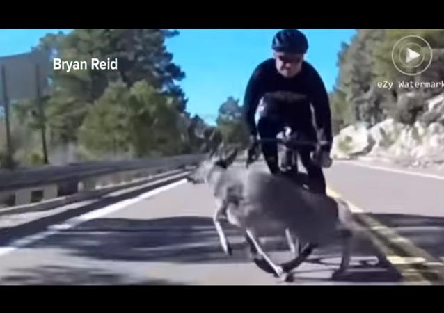 غزال يضرب دراجة رياضي في أمريكا