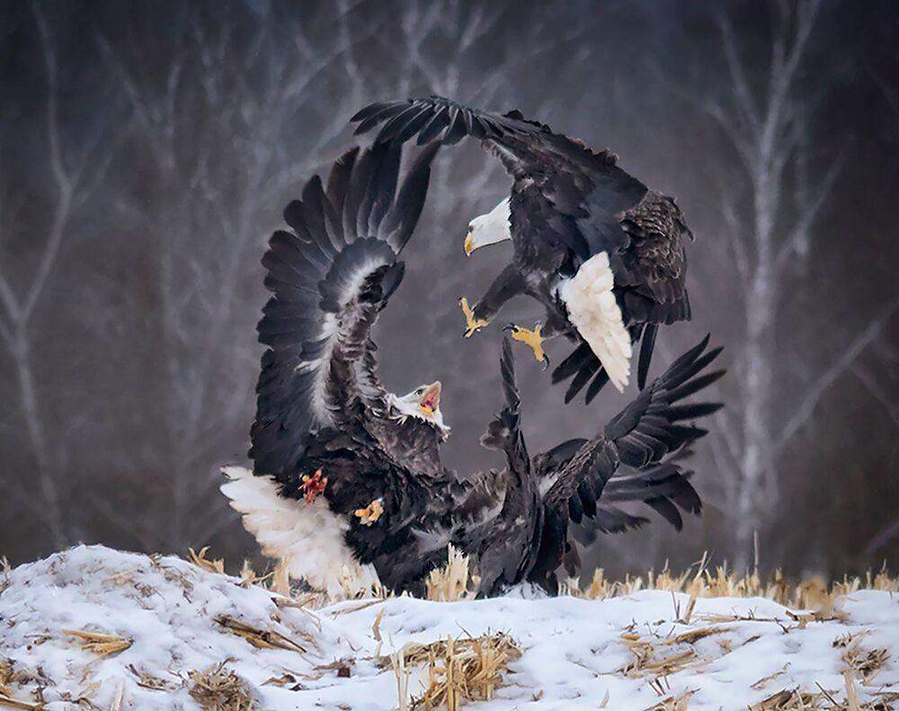 صورة دائرة القوة، للمصور ساندي ليتل من كندا، في فئة عالم الطبيعة والحياة البرية