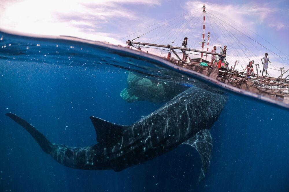 صورة لقاء مع الحوت القرش، للمصور ماركو زافيغناني من إيطاليا، في فئة السفر