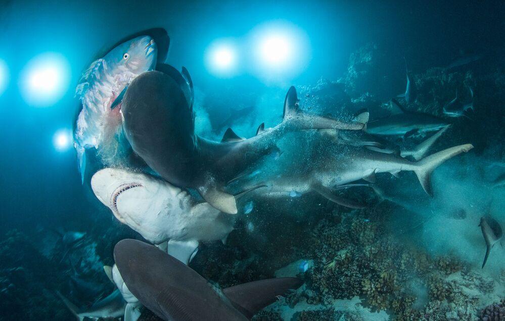 صورة بعنوان التحدي (The Gauntlet) للمصور البريطاني (Richard Barnden)، الفائز في المسابقة