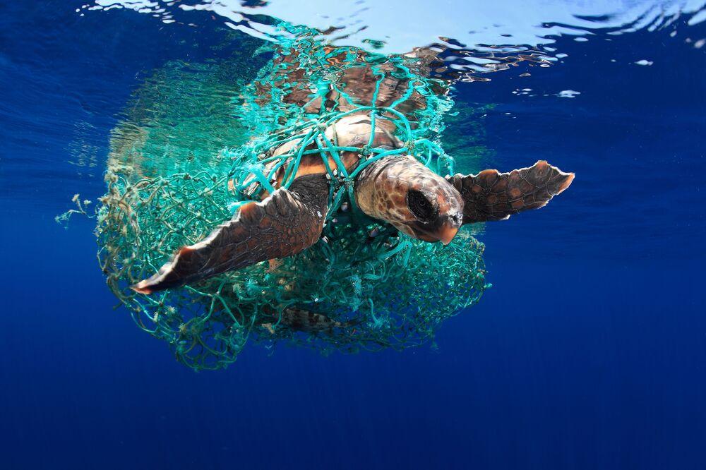 صورة بعنوان سلحفاة كاريتا ( Caretta caretta turtle)، للمصور الإسباني أسيفيدو (Acevedo)، التي فازت في فئة حماية البيئة البحرية في فئة