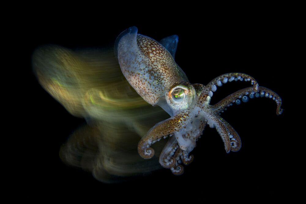 صورة بعنوان الحبّار السريع (Fast cuttlefish) للمصور الإيطالي فابيو لاردينو، الفائز في فئة دقيق