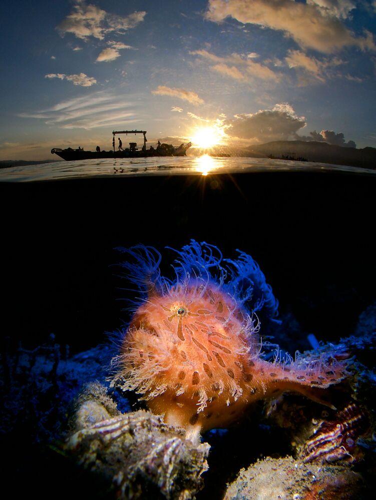 صورة بعنوان شروق أشعث (Hairy in the Sunrise) للمصور الألماني إنريكو سوموجيي، الفائز في فئة مدمج