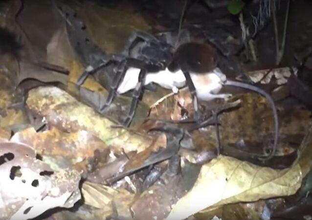 شاهد ماذا يفعل العنكبوت قبل أن ينقض على فريسته