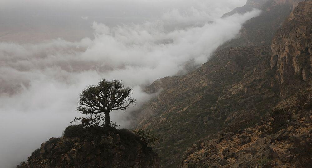 شجرة على منحدر جبل جبل سمحان فوق السحب جنوب عمان