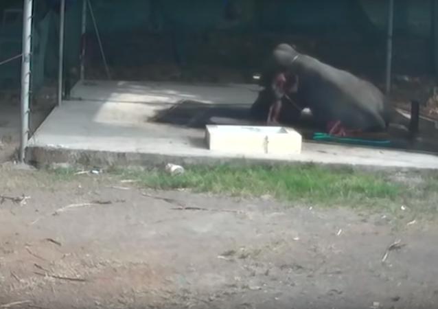 فيل يقتل رجلا في الهند
