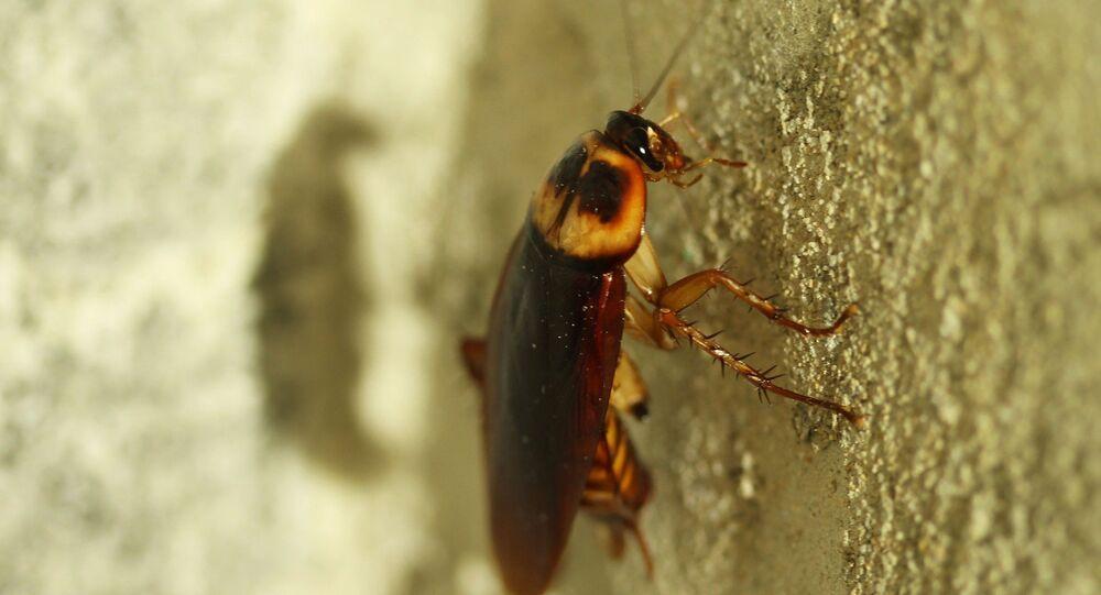 كم تستطيع الصراصير العيش دون رأس