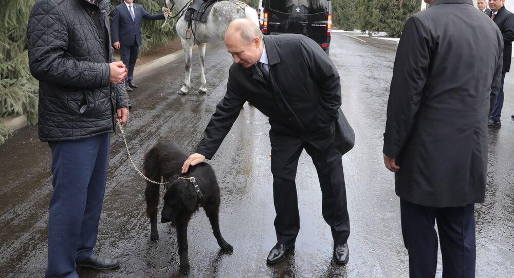 هدية للرئيس الروسي فلاديمير بوتين الكلب شيرخان