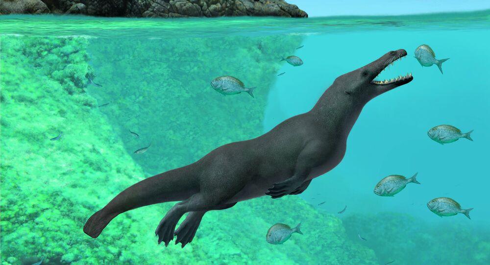 حوت بيريغوسيتوس البرمائي الذي عاش بأربعة أرجل قبل 43 عاما