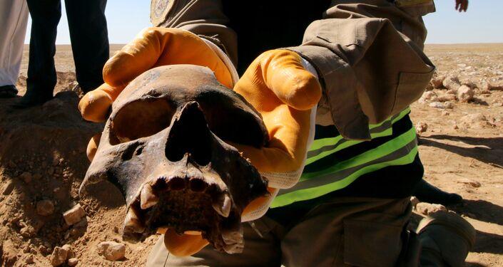 عضو عراقي في الدفاع المدني يظهر جمجمة بشرية من مقبرة جماعية اكتشفت للأكراد في غرب مدينة السماوة